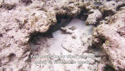 Video Image Thumbnail:Exploring God's Ocean: An Underwater Adventure
