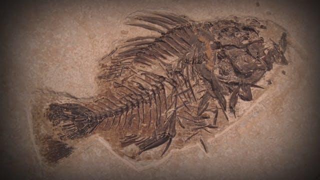 Fossils - No Bones About It