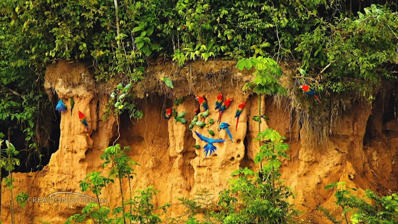 Watch Jobe Martin | Animals of the Amazon