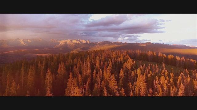 Amazing Sequoias: God's Living Giants Part 2