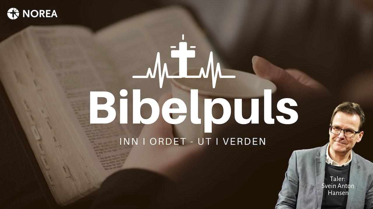 Bibelpuls