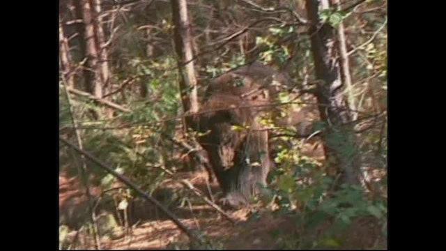 Bears | Creation's Creatures