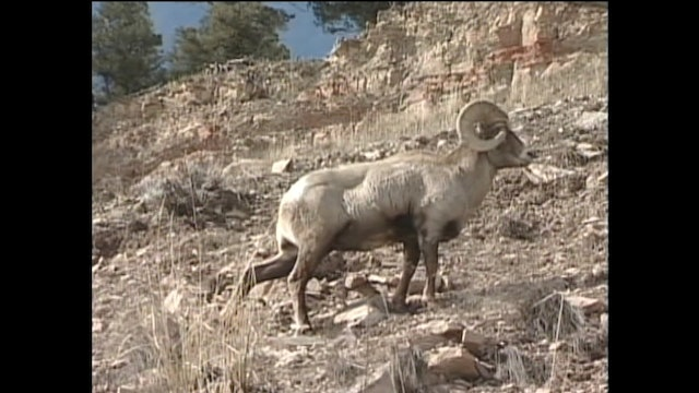 Sheep and Goats | Creation's Creatures