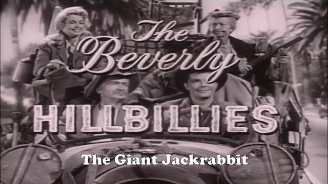 "Beverly Hillbillies ""The Giant Jackrabbit"""