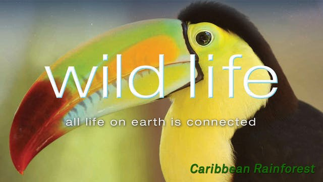 Wild Life - Caribbean Rainforest