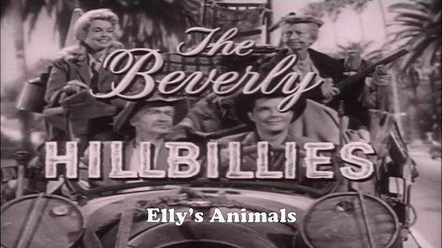 "Beverly Hillbillies ""Elly's Animals"""