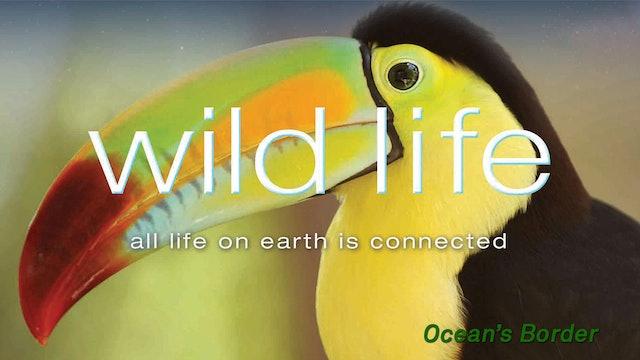 Wild Life - Ocean Border