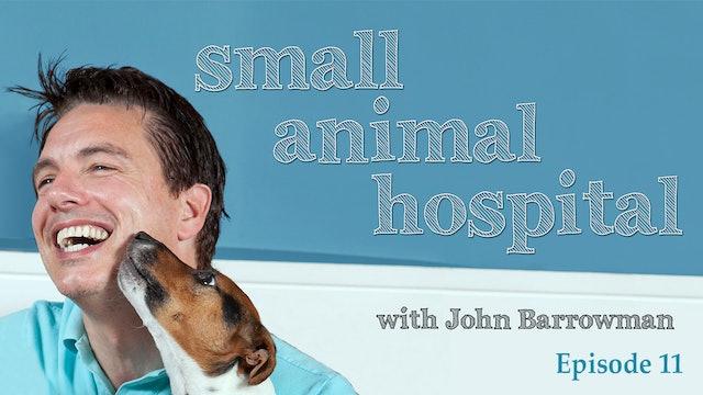Small Animal Hospital: Episode 11
