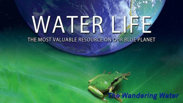 Water Life - Wandering Water