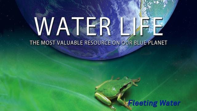 Water Life - Fleeting Water