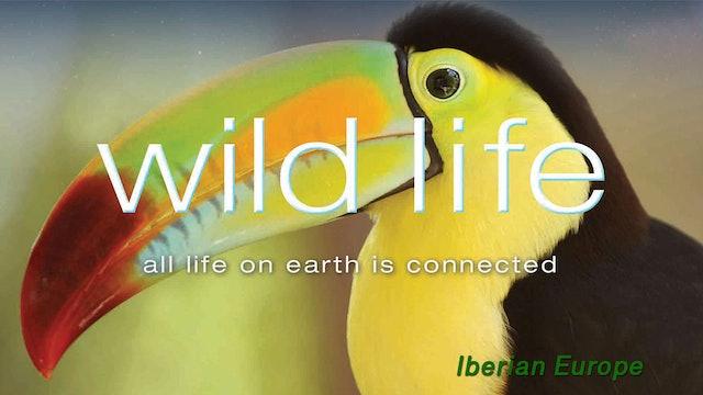 Wild Life - Iberian Europe