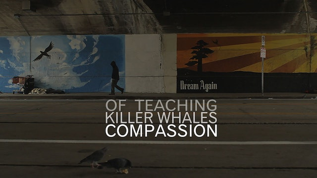 Of Teaching Killer Whales Compassion