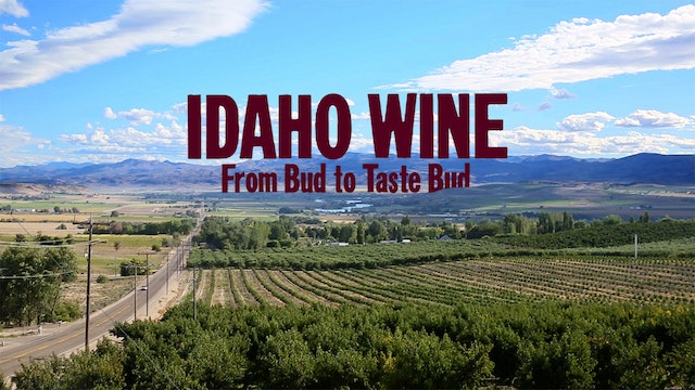 Idaho Wine, From Bud to Taste Bud