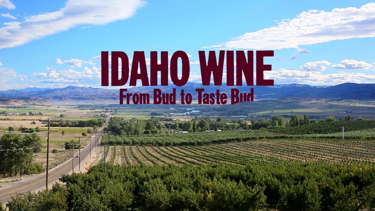 Idaho Wine, From Bud to Taste Bud