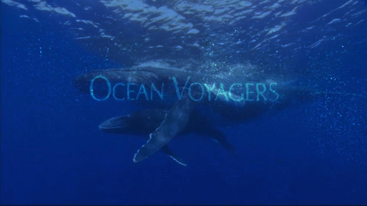 Ocean Voyagers