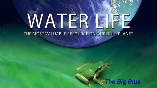 Water Life - The Big Blue