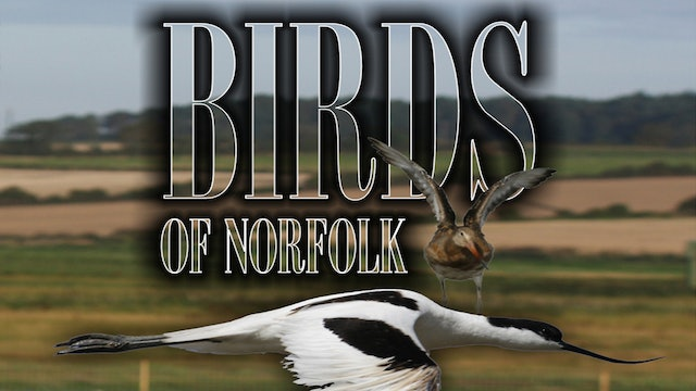 Birds Of Norfolk: A Bird Watchers Dream