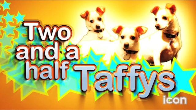 McManusLand: Taffy's Next Chapter