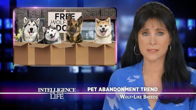 Wolf-Like Breeds And Dog Breed Abando...