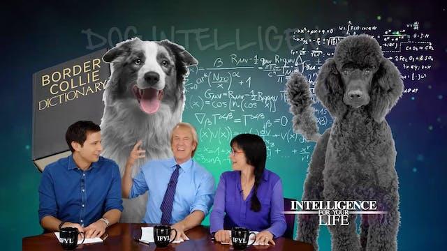 Dog Intelligence Levels
