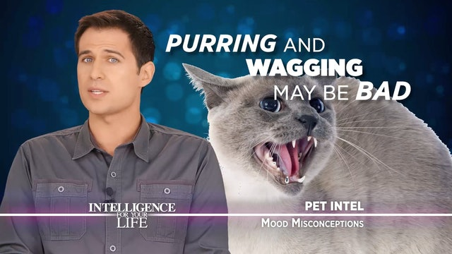 Pet Misconceptions: The Truth About Cats And Dogs