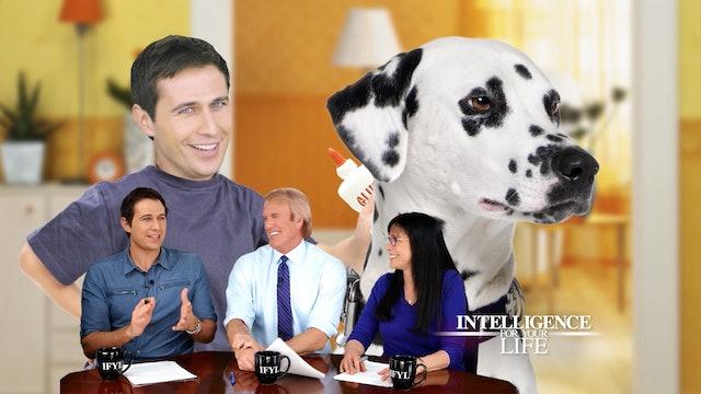 Model Relationships After Dogs