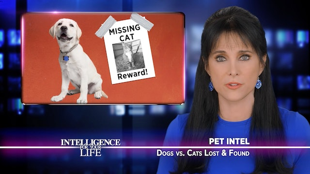 Dogs Vs Cats: Lost And Found
