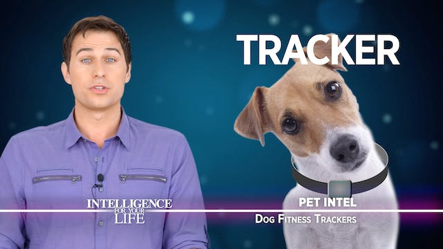 Dog Fitness Trackers