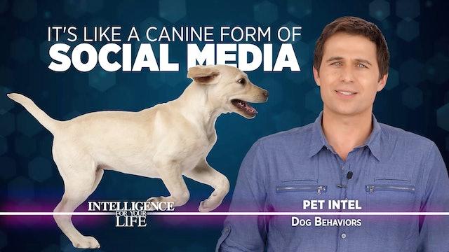 Dog Behaviors