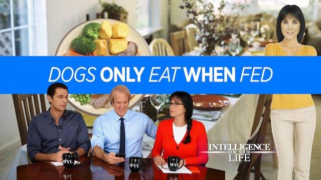 Live Like Your Dog