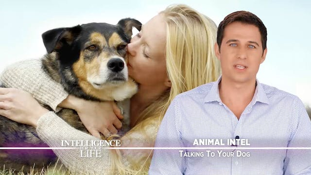 Talking To Your Dog