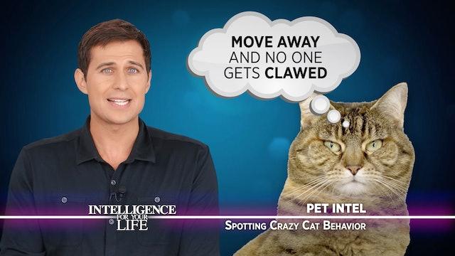 Spotting Crazy Cat Behavior