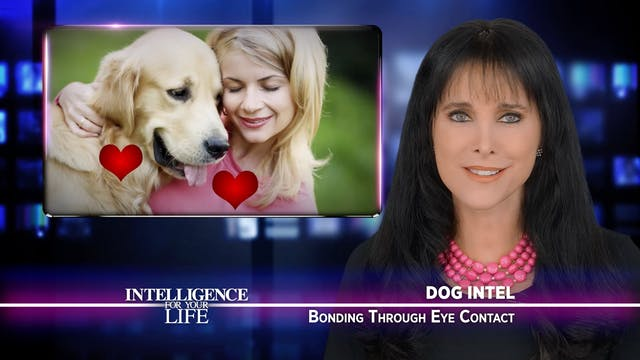 Bonding With Your Dog Through Eye Con...