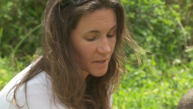 Tracey at Lewa - Rhino Poaching (ITV NEWS)-HD