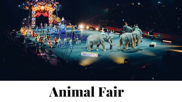 The-Animal-Fair