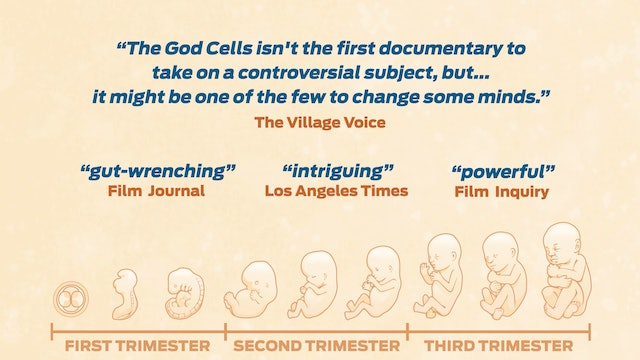 2-Minute Trailer | The God Cells: A Fetal Stem Cell Journey