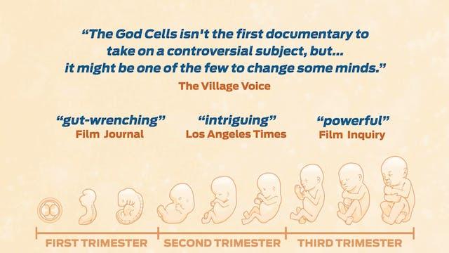 2-Minute Trailer | The God Cells: A Fetal Stem Cell Journey