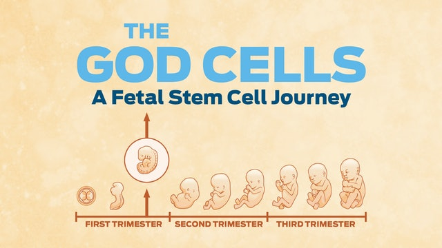 The God Cells: A Fetal Stem Cell Journey