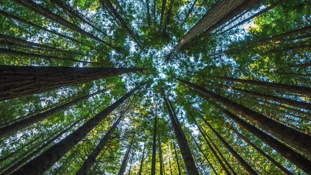 Redwood Forest Guided Meditation