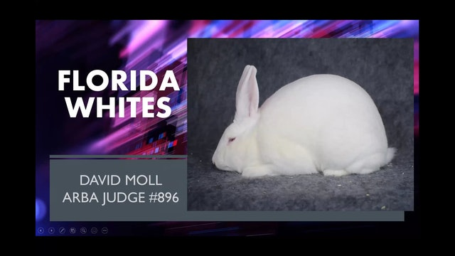 Florida Whites by David Moll ARBA Judge #896