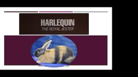 The Rabbit Show Video