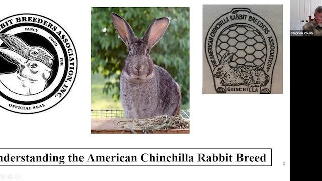 American Chinchilla Stephen Roush
