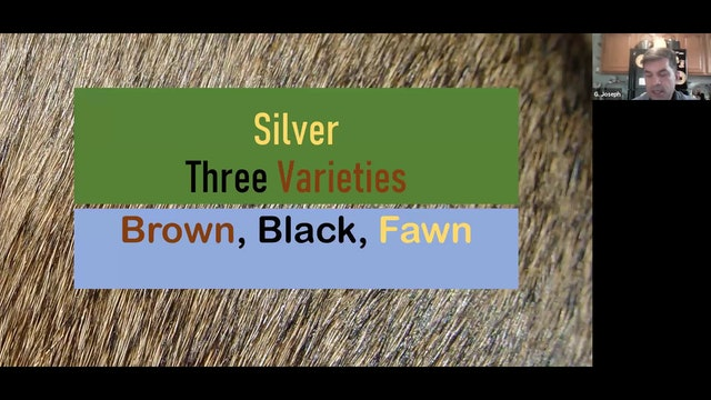Silvers by Joseph Colucci ARBA Judge # 885