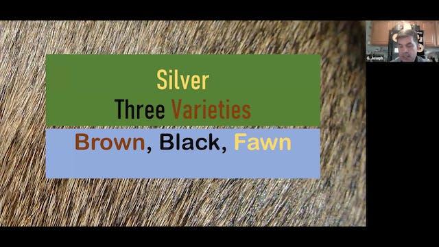 Silvers by Joseph Colucci ARBA Judge ...