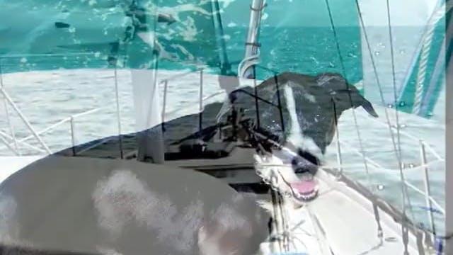 LATV S4:49: Pittwater Regatta, Australia