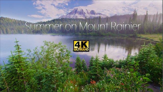 Summer on Mount Rainier