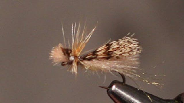 Ben Byng: CDC Caddis