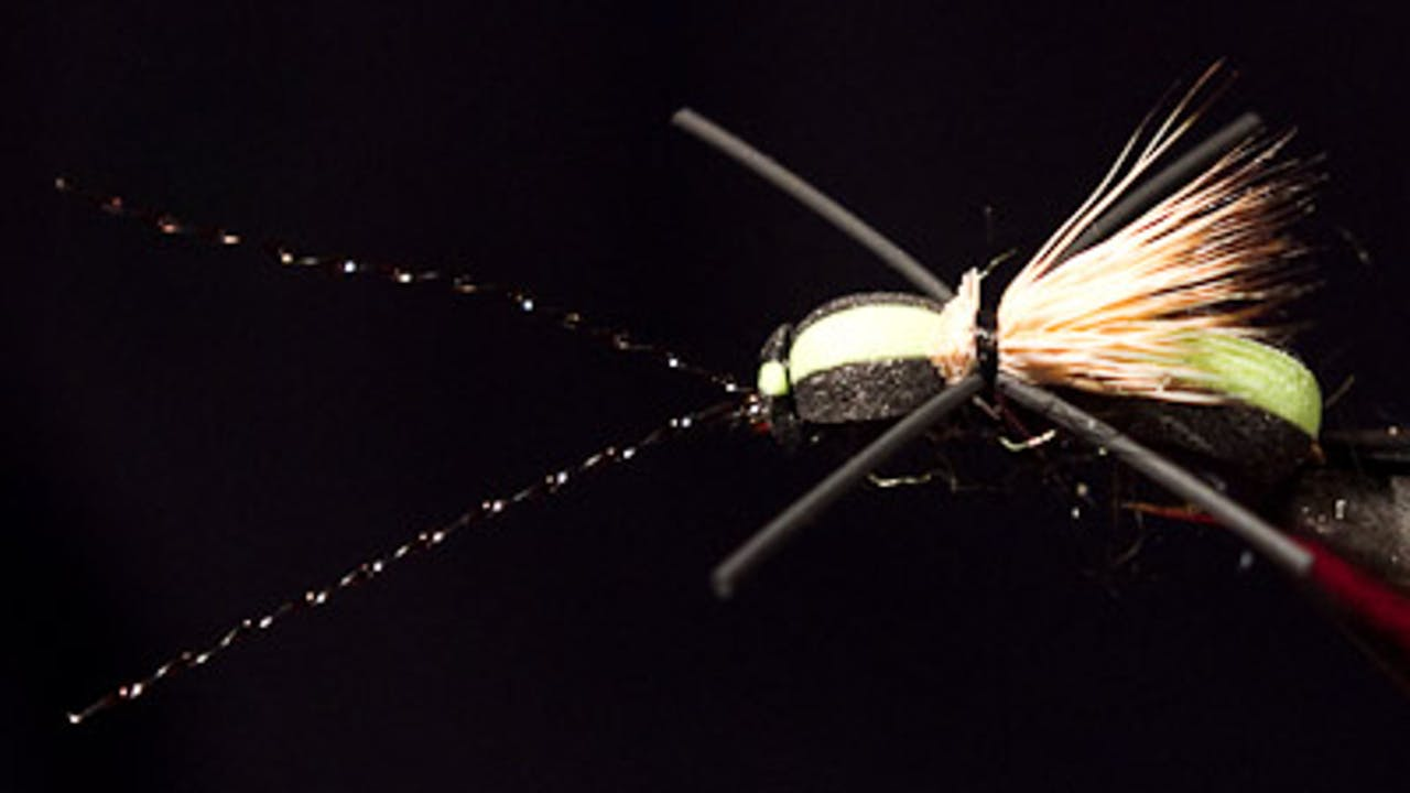 Dave McKee: Long Horned Beetle