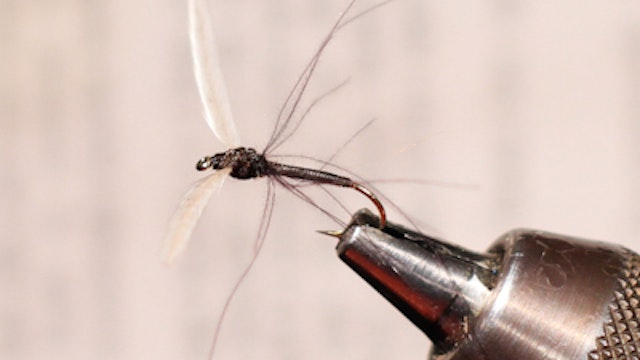 Dean Reiner: Hackle Stem Crane Fly