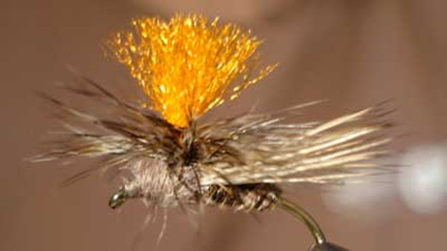 Dave Bloom: Bloom's Parachute Caddis